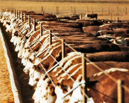 В Курганской области подвели итоги развития животноводства
